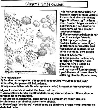 immologi002